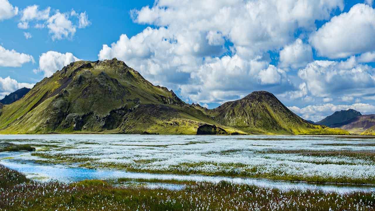 Votlendi og viðkvæm svæði á Íslandi ber að vernda, landvernd.is