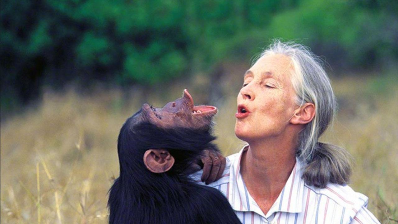 Hin merka vísindakona Dr. Jane Goodall stofnaði alþjóða ungmennahreyfinguna Roots and shoots, landvernd.is